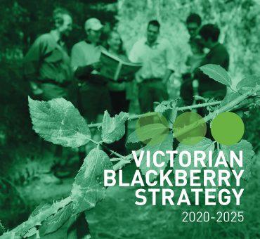 VICTORIAN BLACKBERRY STRATEGY